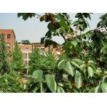 成都华西中学(电子科技大学附属中学)照片